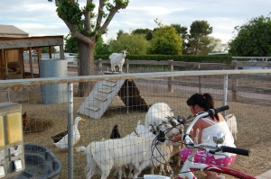 Yes that is Kelley with a bunch of baby goats!