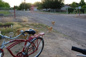 Of course the chickens crossed the road!